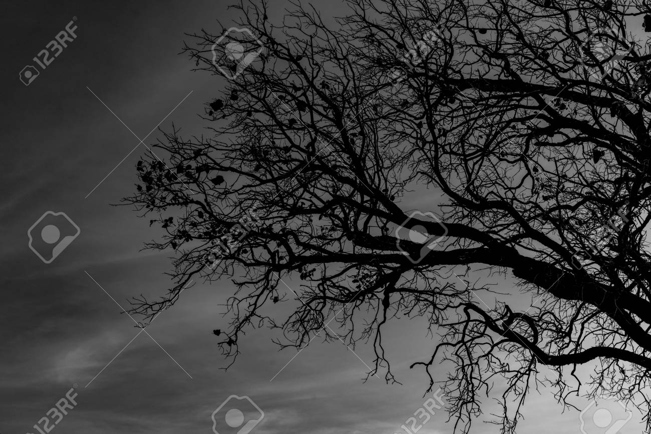 Silhouette dead tree on dark dramatic sky background for scary