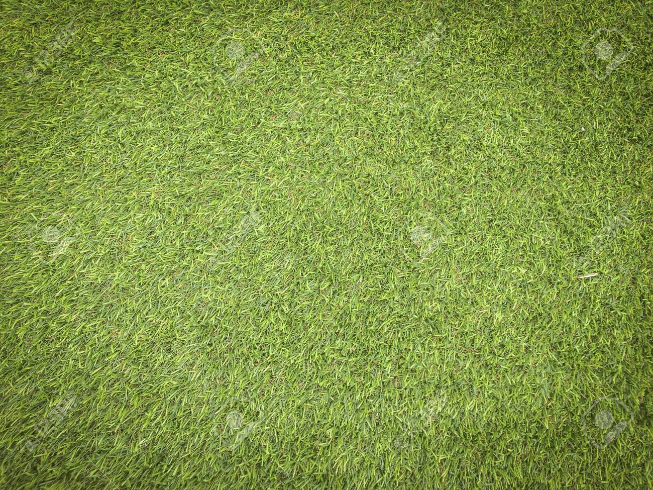 Nature green grass texture background for design. Eco concept. - 139925874
