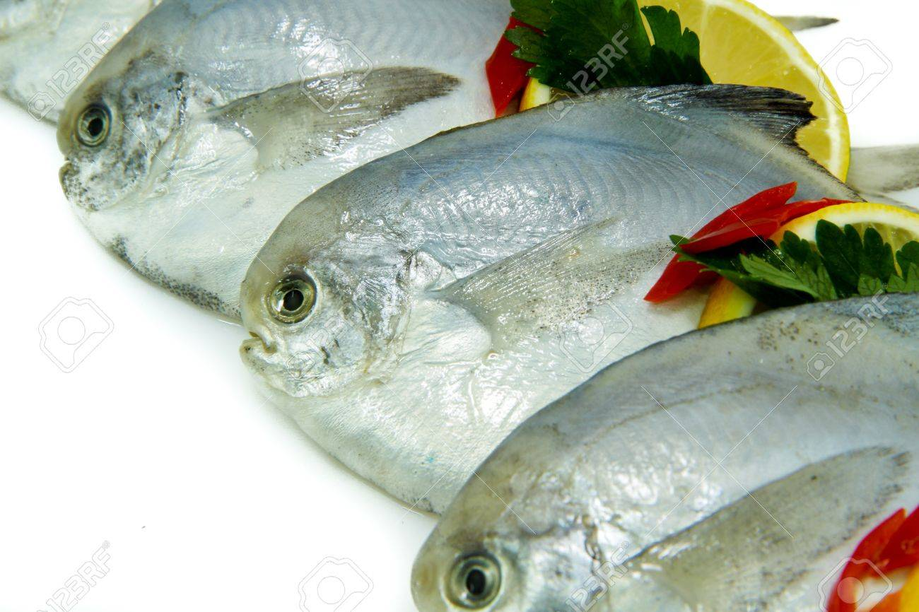 Close-Up of Fresh White Pomfret with Lemon - 8828999