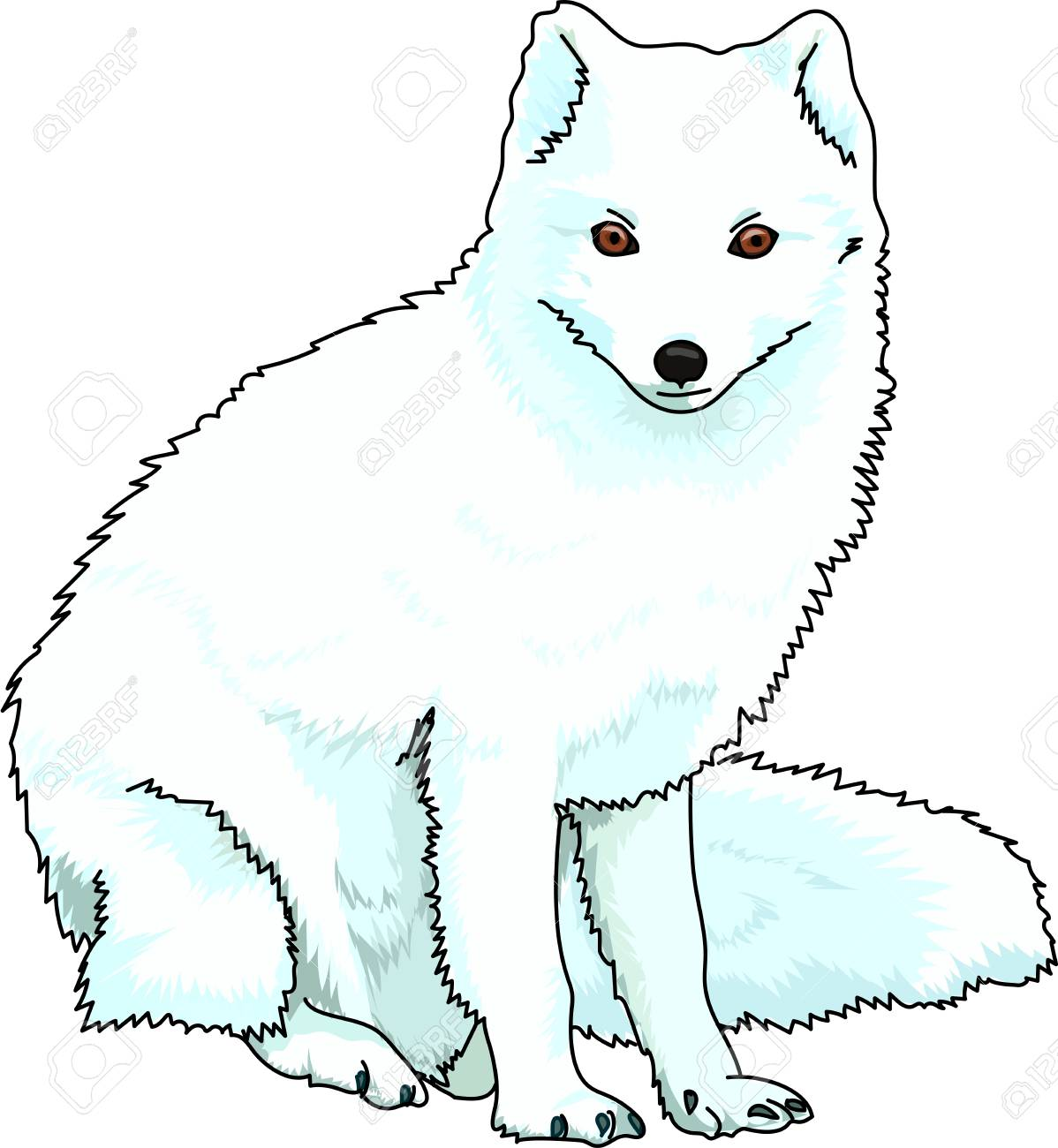 A blue fluffy arctic fox on a white background. - 73762288
