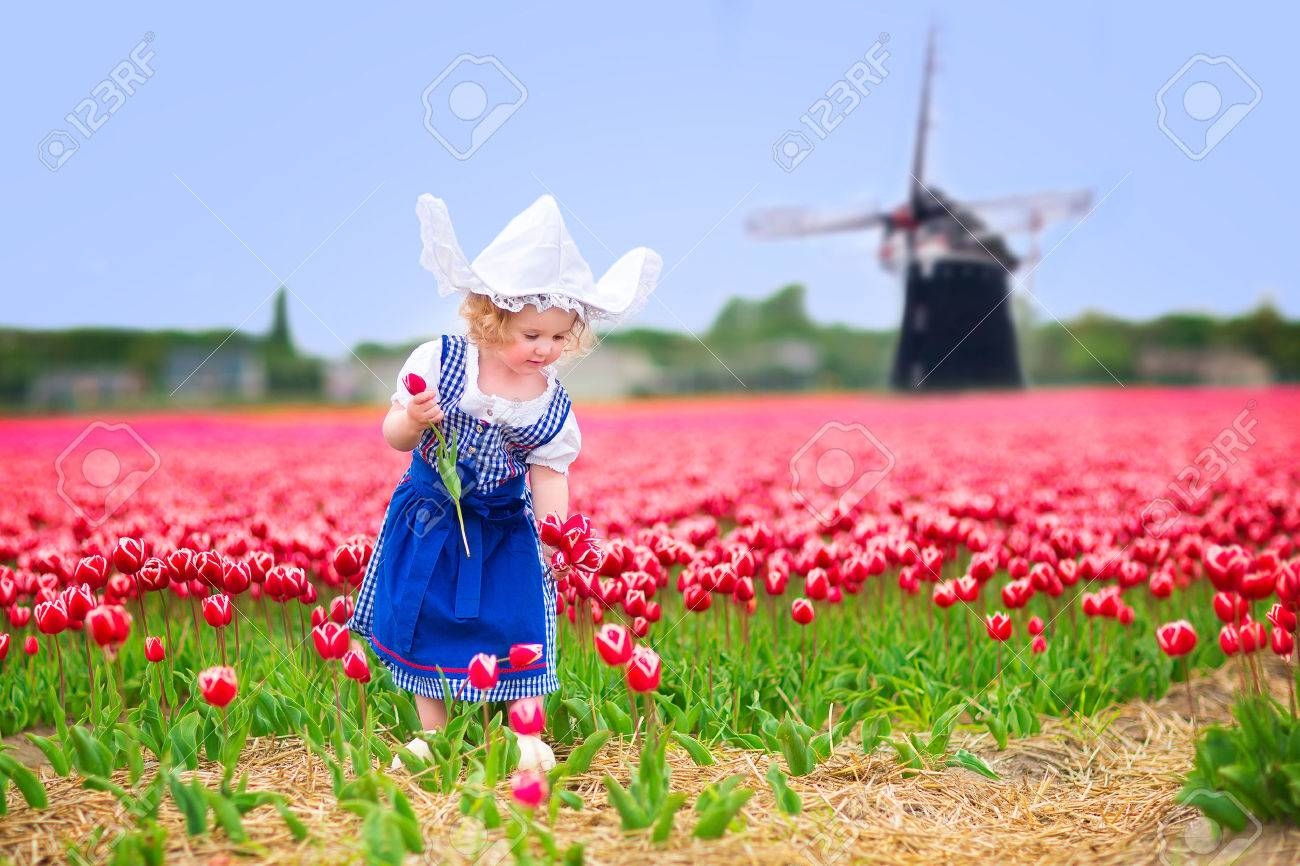 Adorable curly toddler girl wearing Dutch traditional national costume dress and hat playing in a field of blooming tulips next to a windmill in Amsterdam region, Holland, Netherlands - 30855715