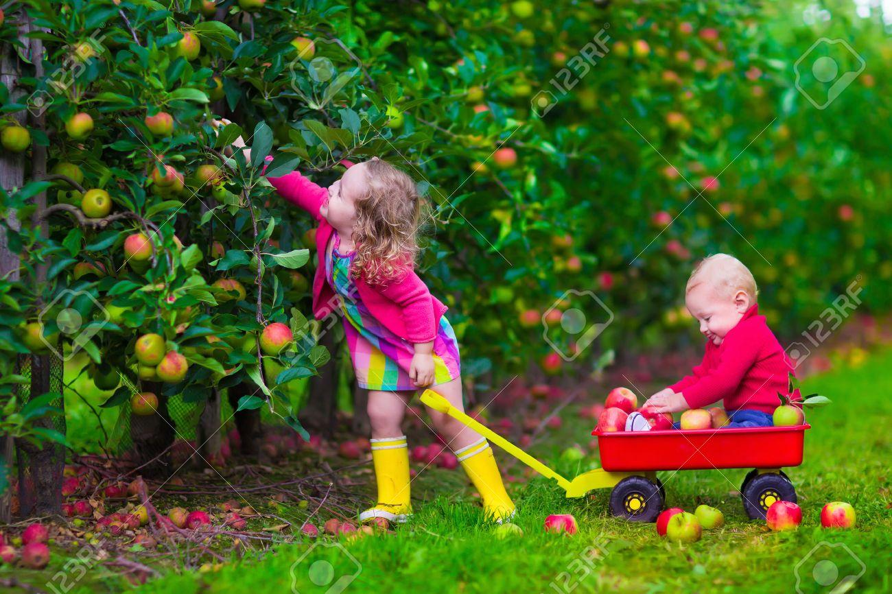 Bon Vendredi 41386735-Enfant-cueillir-des-pommes-dans-une-ferme-Petite-fille-et-jeu-de-gar-on-dans-pommier-verger-Les-enfa-Banque-d%27images