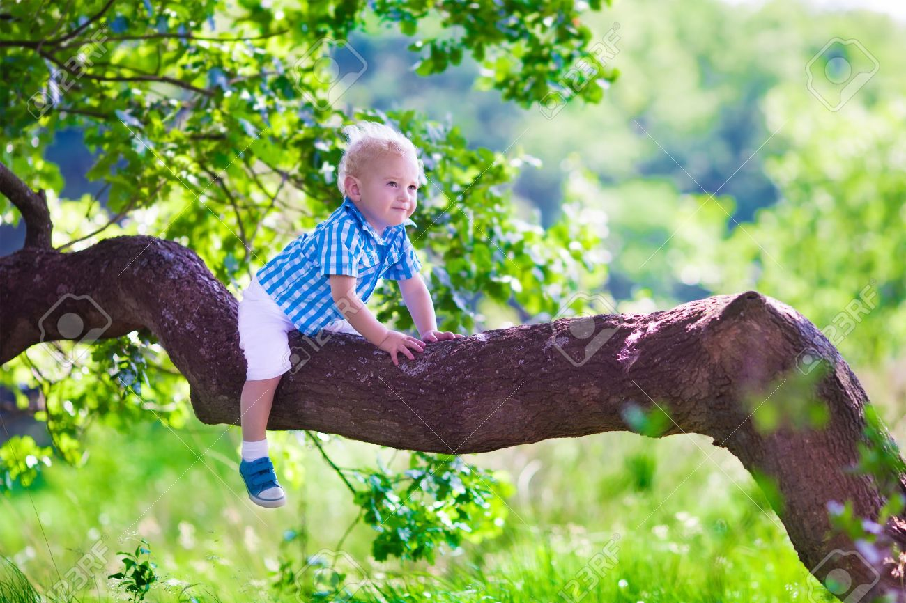 tree climbing images u0026 stock pictures royalty free tree climbing