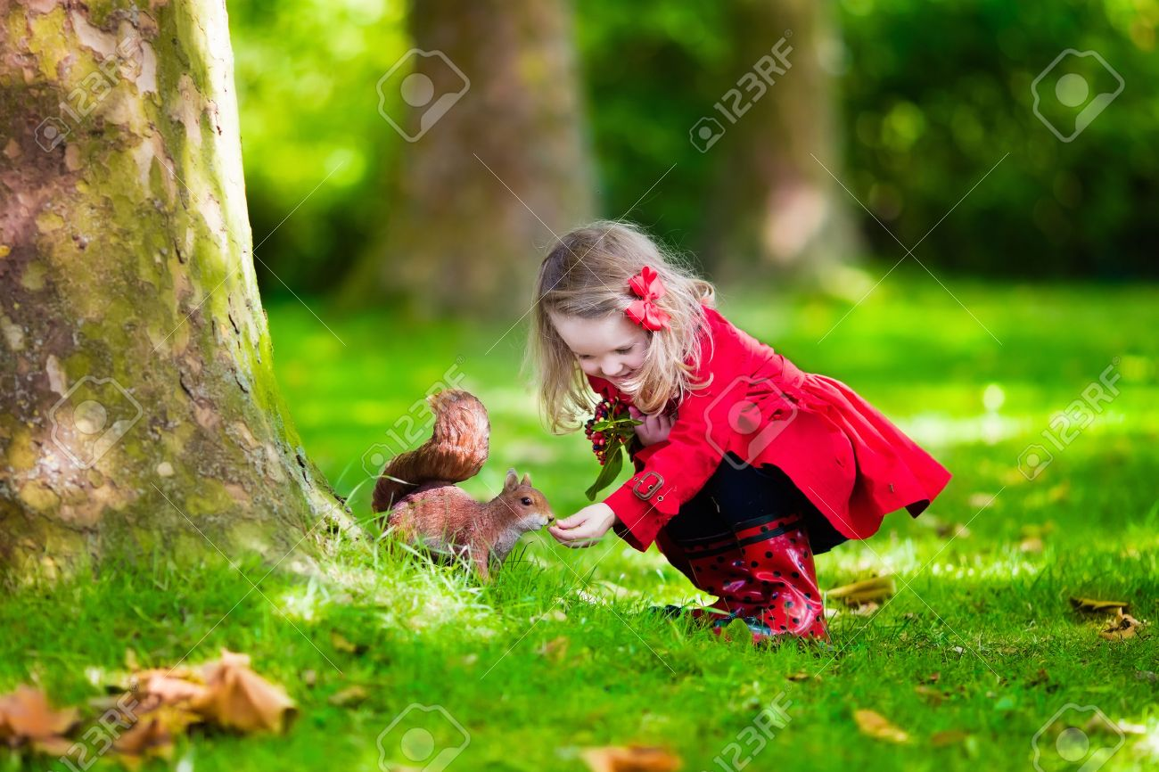Girl feeding squirrel in autumn park. Little girl in red trench coat and rain boots watching wild animal in fall forest with golden oak and maple leaves. Children play outdoors. Kids playing with pets Stock Photo - 43360239