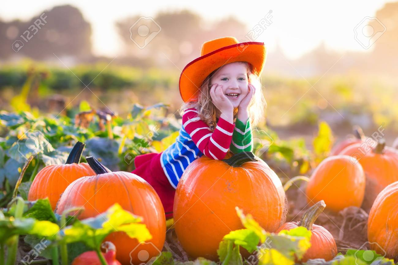 Little girl picking pumpkins on Halloween pumpkin patch. Child playing in field of squash. Kids pick ripe vegetables on a farm in Thanksgiving holiday season. Family with children having fun in autumn - 45732161
