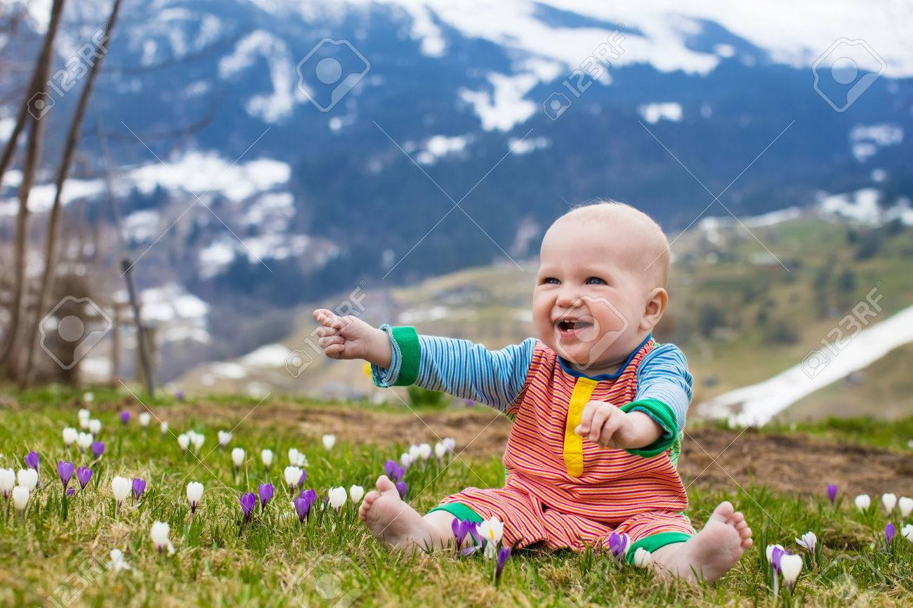 Little Baby Playing With Crocus Flowers In The Alps Mountains ...