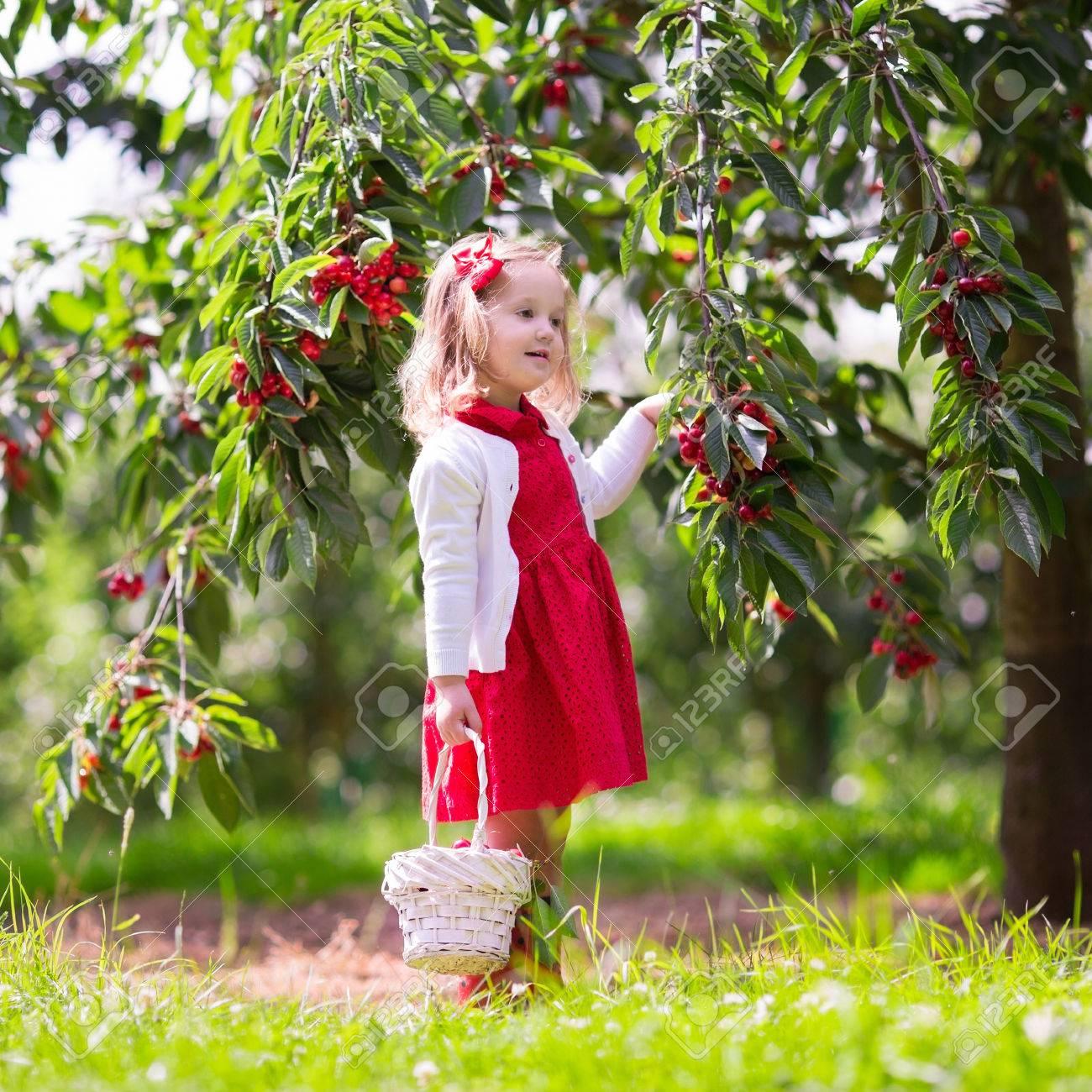 Kids Picking Cherry On A Fruit Farm. Children Pick Cherries In ... for Fruit Farm Photography  568zmd