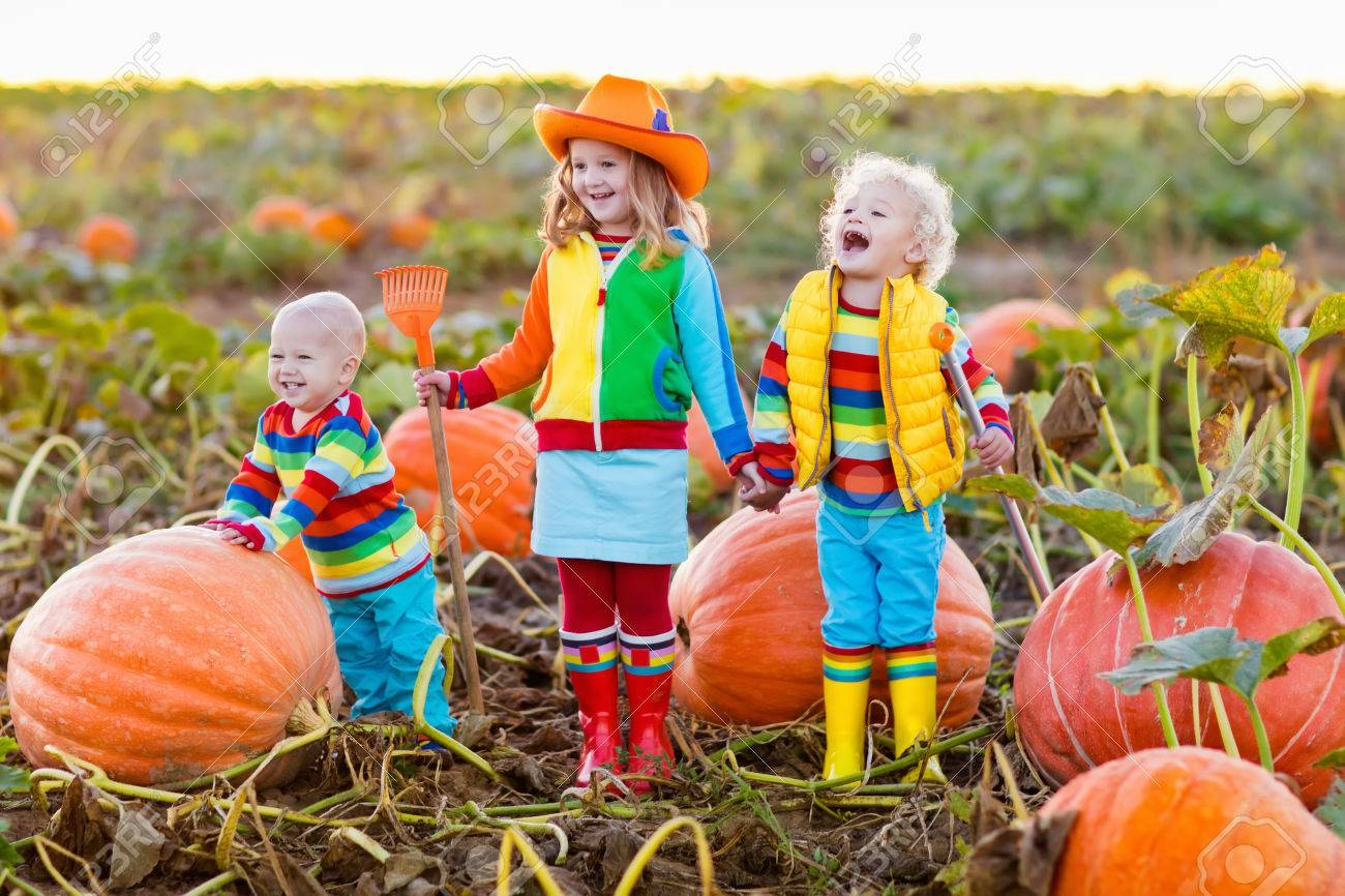 little girl, boy and baby picking pumpkins on halloween pumpkin