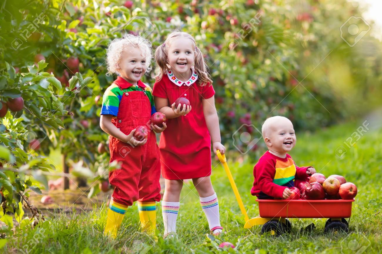 children picking apples in fruit garden. girl, boy and baby play