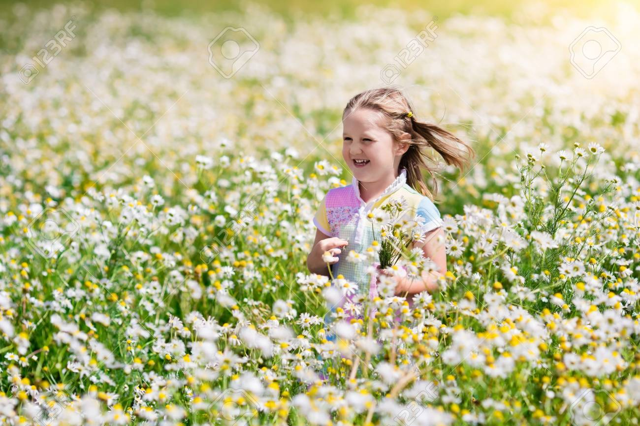 Child Playing In Daisy Field Girl Picking Fresh Flowers In Daisies