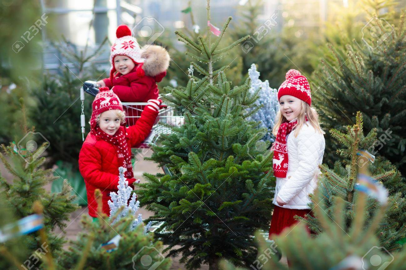 Family Selecting Christmas Tree Kids Choosing Freshly Cut Norway