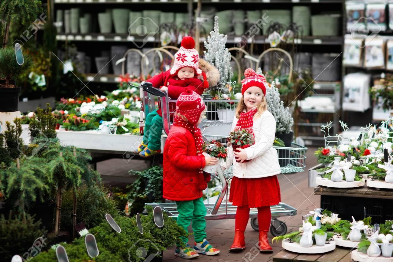 Family Selecting Christmas Tree. Kids Choosing Freshly Cut Norway ...