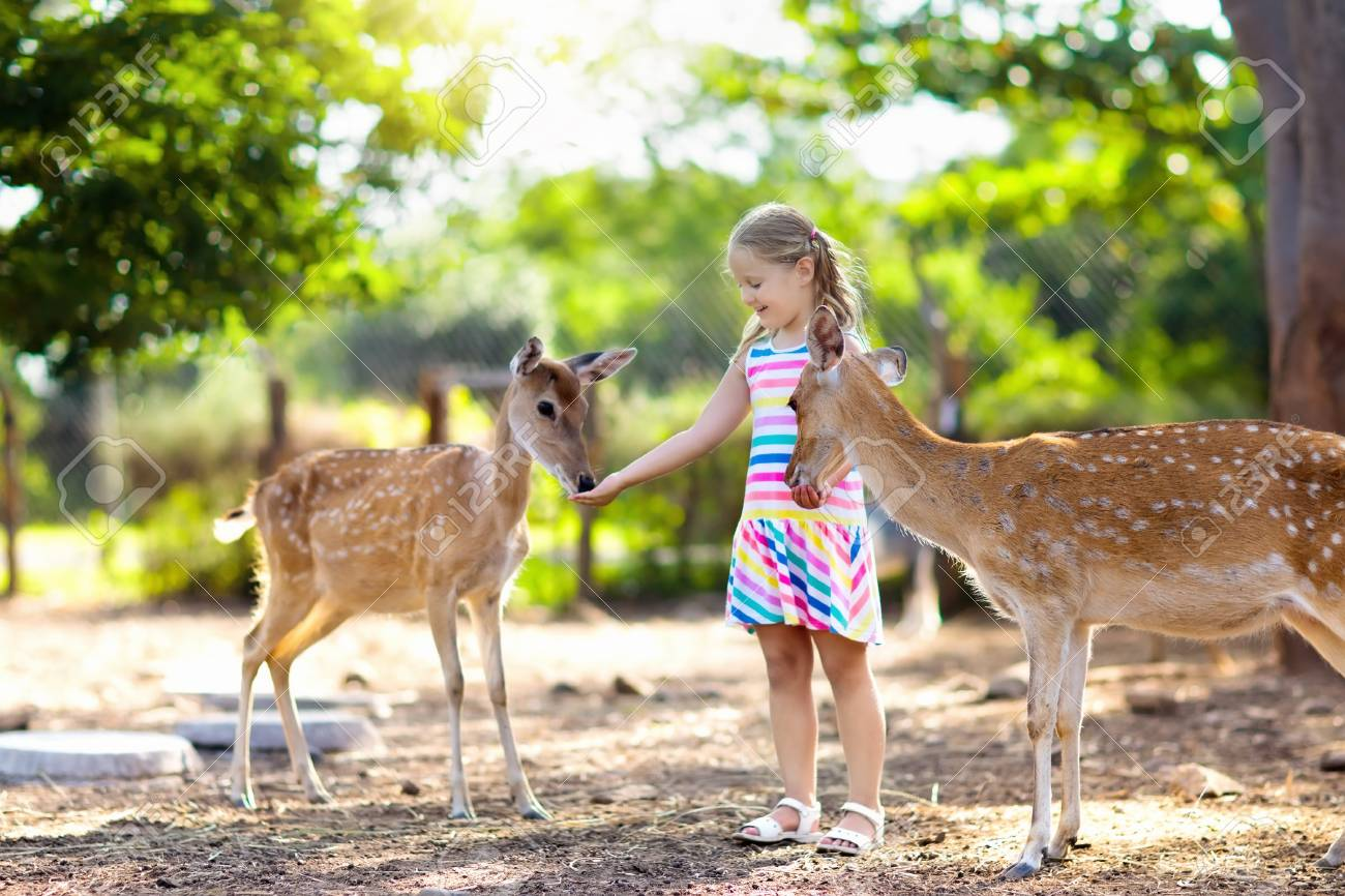 Child Feeding Wild Deer At Petting Zoo. Kids Feed Animals At ...