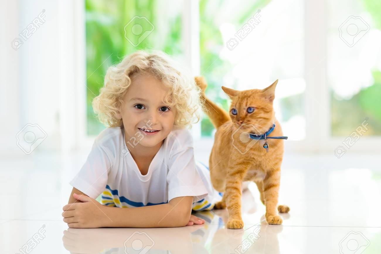 Child Feeding Cat At Home Kid And Pet Little Blond Curly Boy Stock Photo Picture And Royalty Free Image Image 112771336