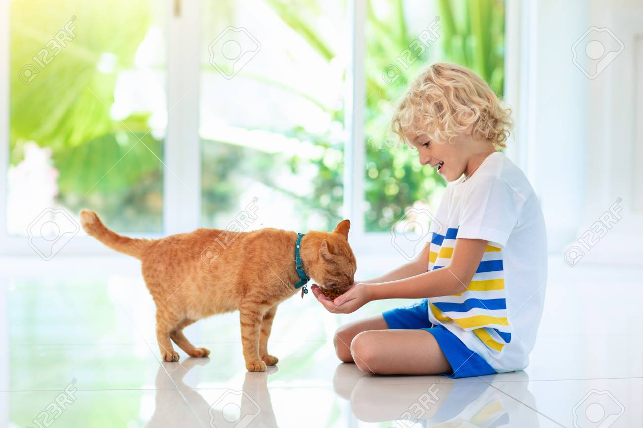Child Feeding Cat At Home Kid And Pet Little Blond Curly Boy Stock Photo Picture And Royalty Free Image Image 121570897