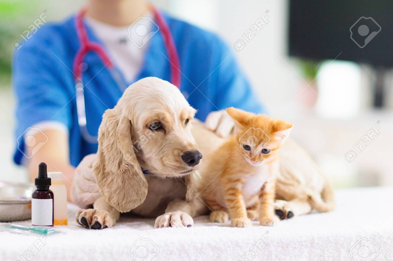Vet examining dog and cat. Puppy and kitten at veterinarian doctor. Animal clinic. Pet check up and vaccination. Health care for dogs and cats. - 128867164