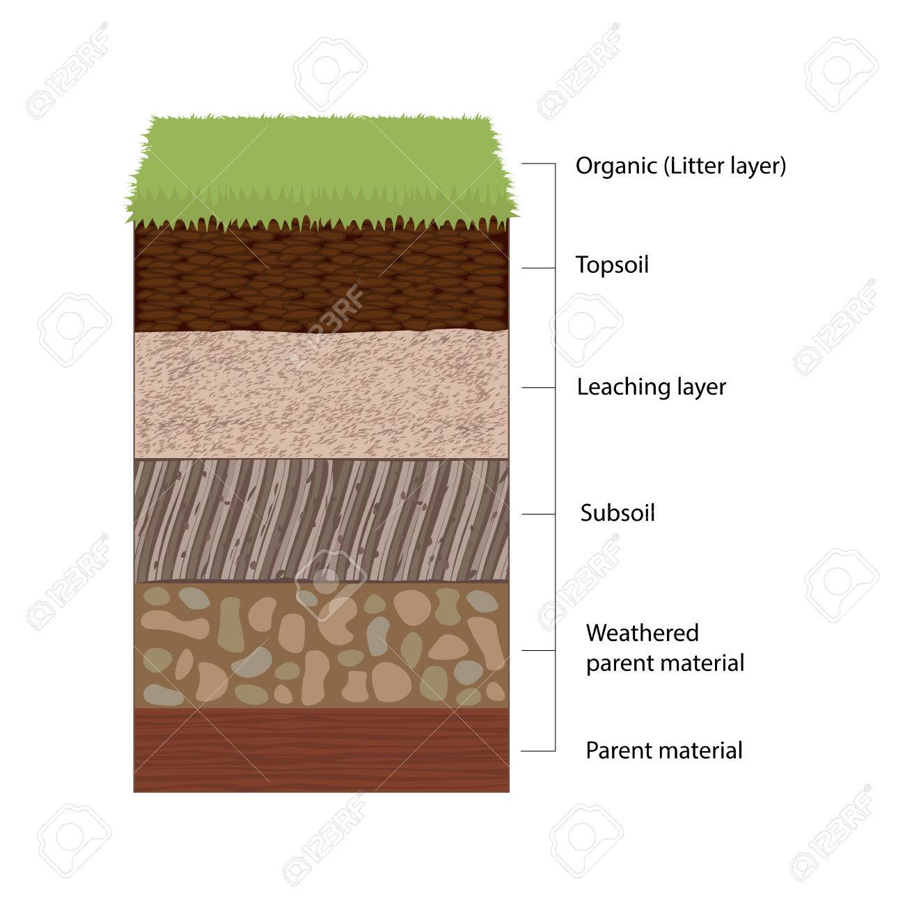 Soil Horizons And Layers Royalty Free Cliparts, Vectors, And Stock  Illustration. Image 74953262.