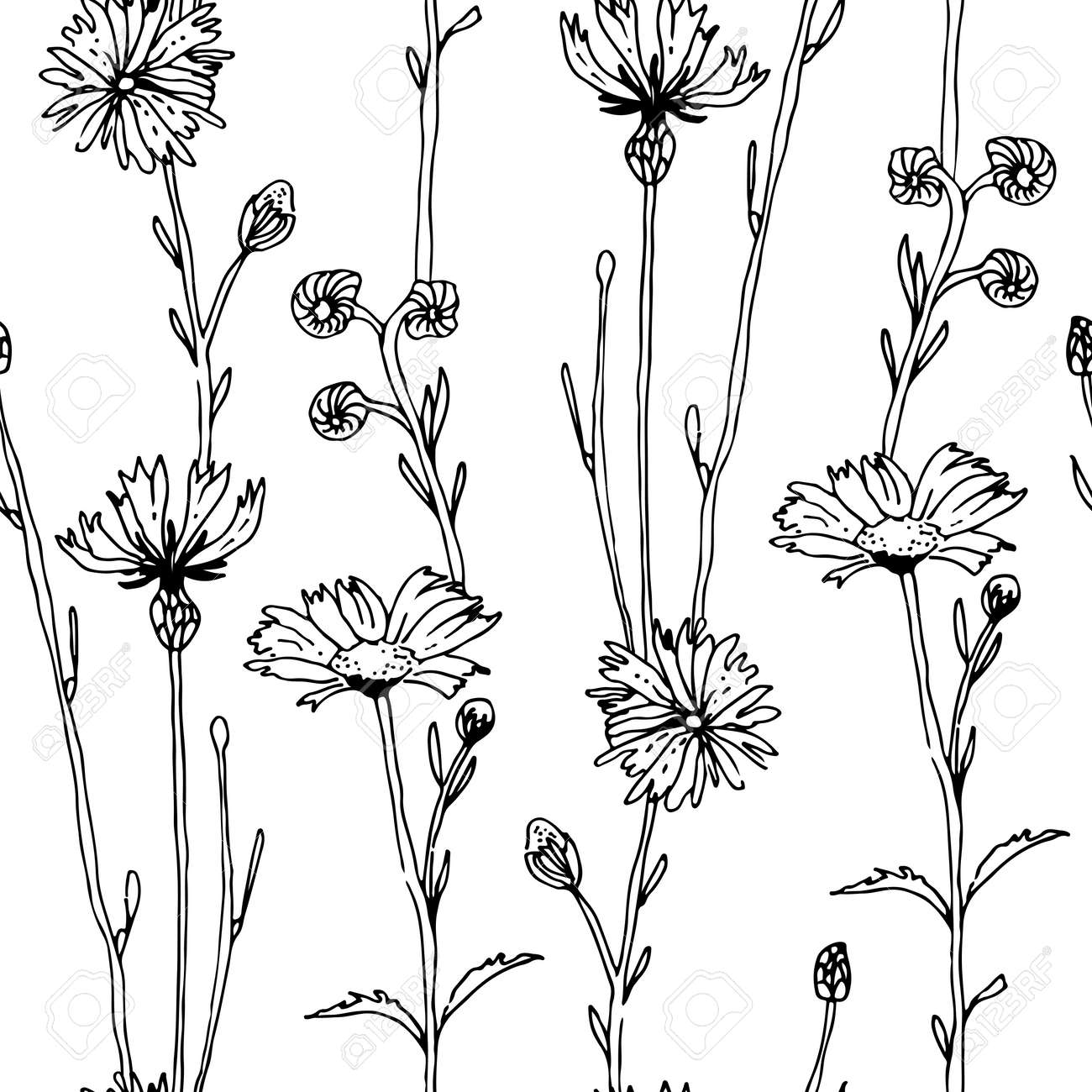 Herbs and flowers seamless vector pattern, isolated on white background - 166396006