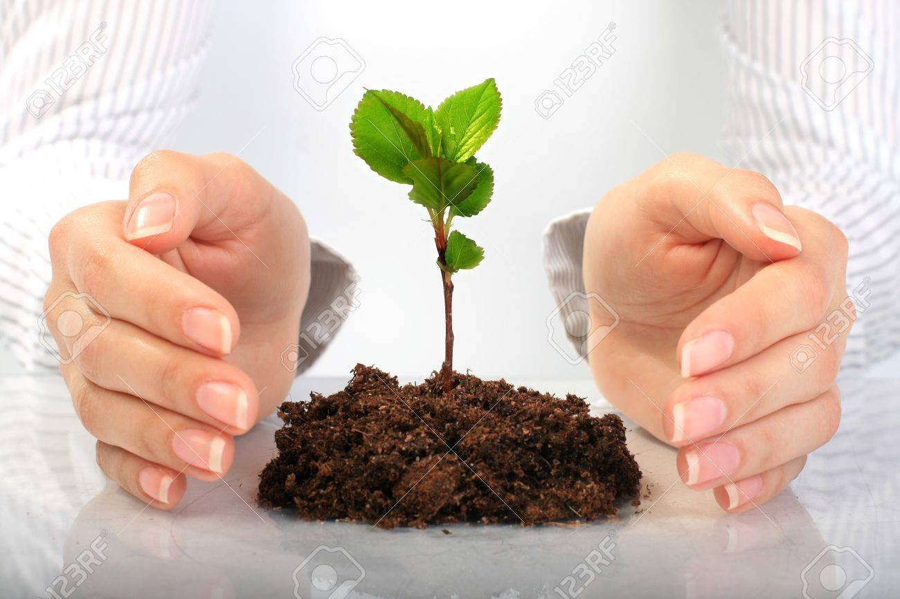 Small plant in hands. Isolated over white. Stock Photo - 7023739