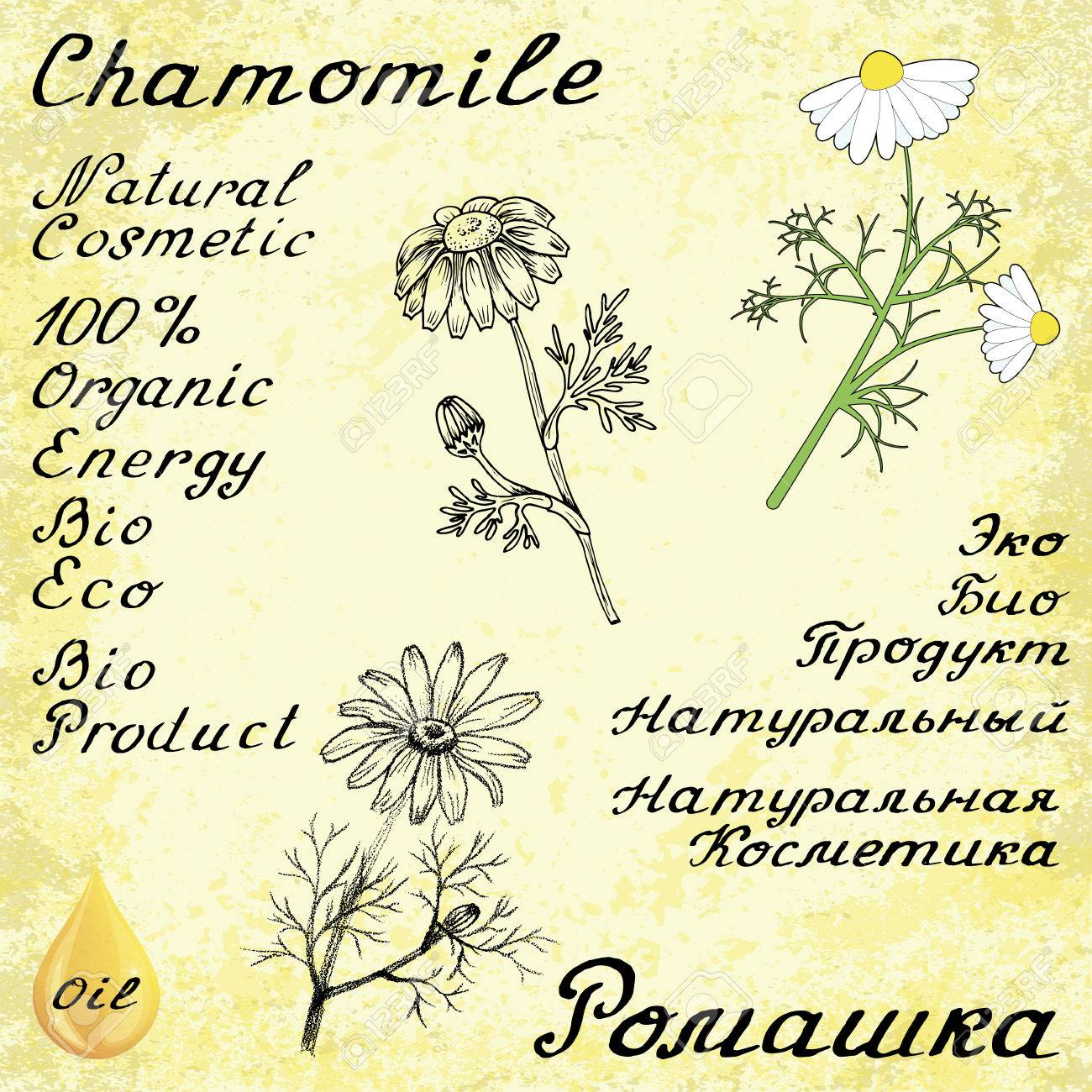 Chamomile   English and Russian texts  Eco Friendly  For labels,