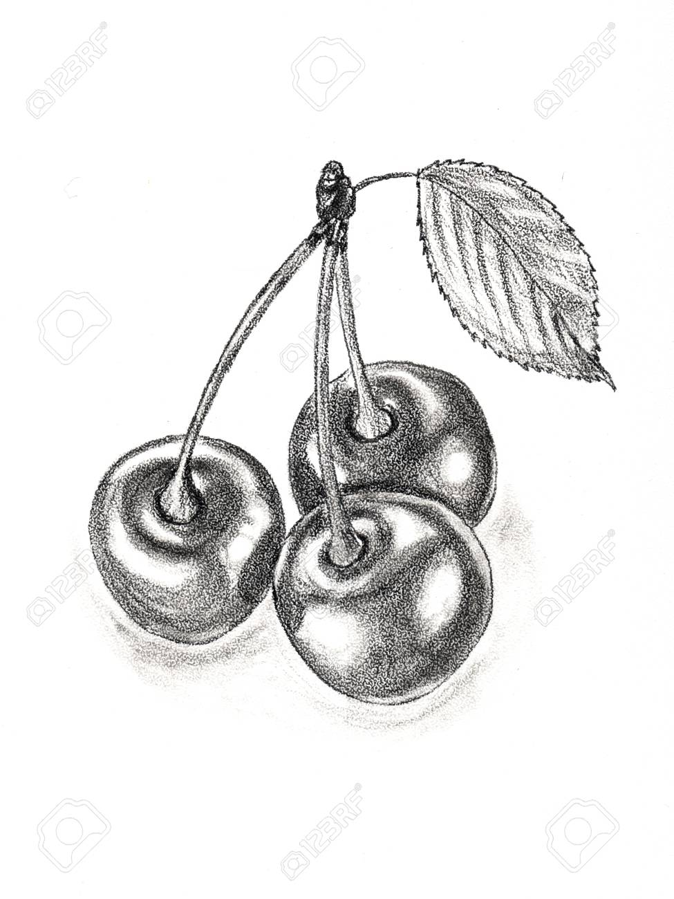 Three berries on a branch with a leaf hand drawing with a