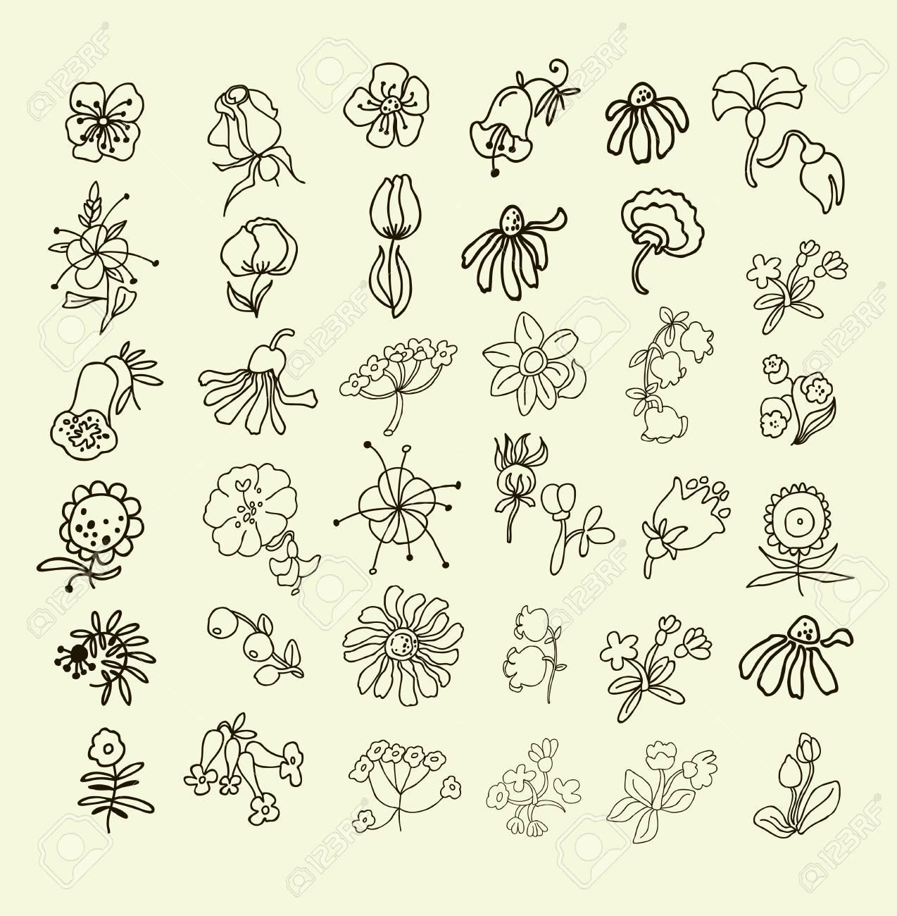 Colección De Flores Dibujadas A Mano. Elementos Para Su Diseño ...