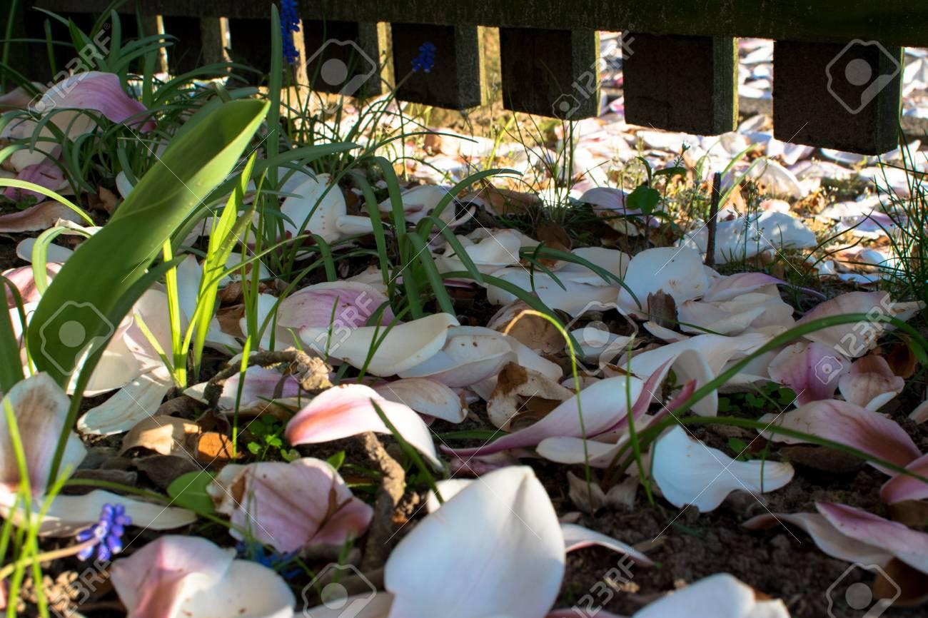 Spring Season Flowers In Europe Germany Vivd Colors Stock Photo