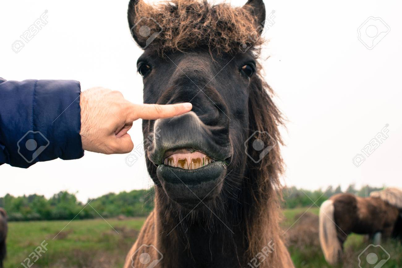 A Funny Face Of A Brown Horse Expression Stock Photo Picture And Royalty Free Image Image 81379361
