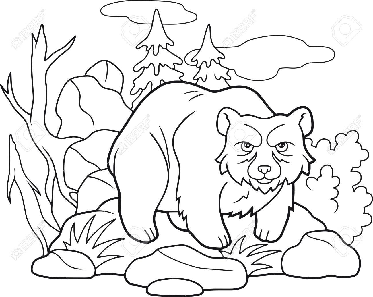 Cartoon Funny Bear Coloring Book Royalty Free Cliparts, Vectors, And ...