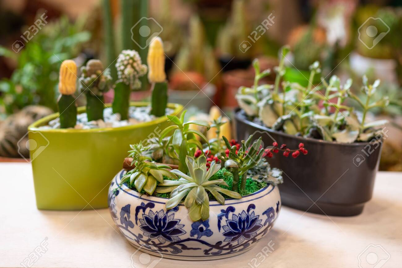 Terrarium Plant With Succulent Cactus In Abstract Pot Stock Photo Picture And Royalty Free Image Image 150778509