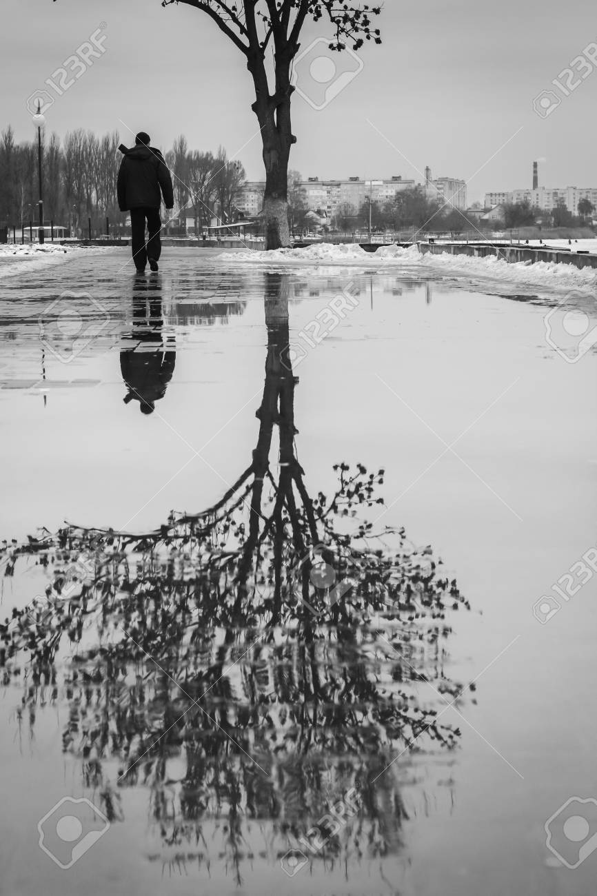 Puddle reflection of tree and walking person black and white photo stock photo