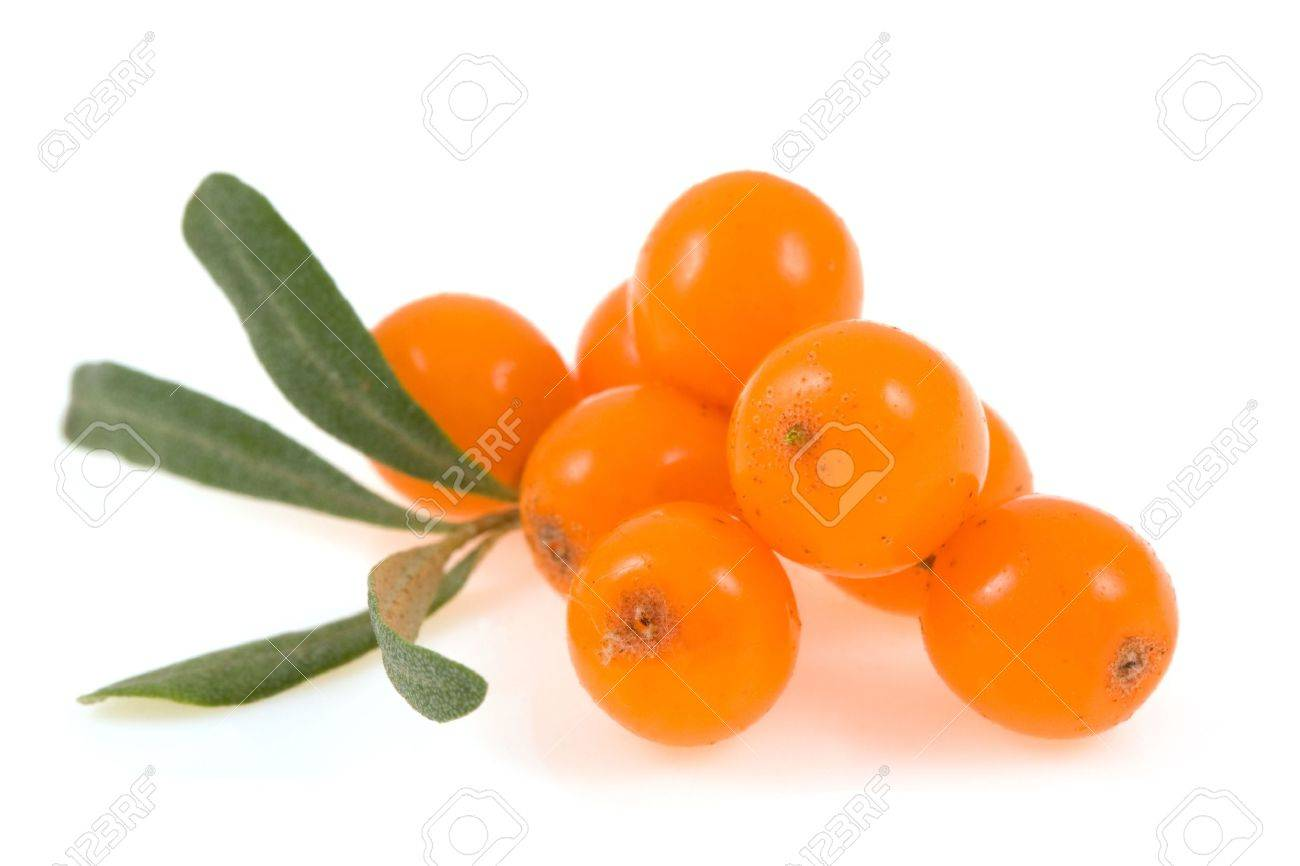 sea buckthorn isolated on the white - 5489543