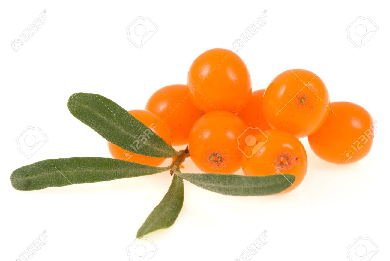 sea buckthorn isolated on the white - 6425942