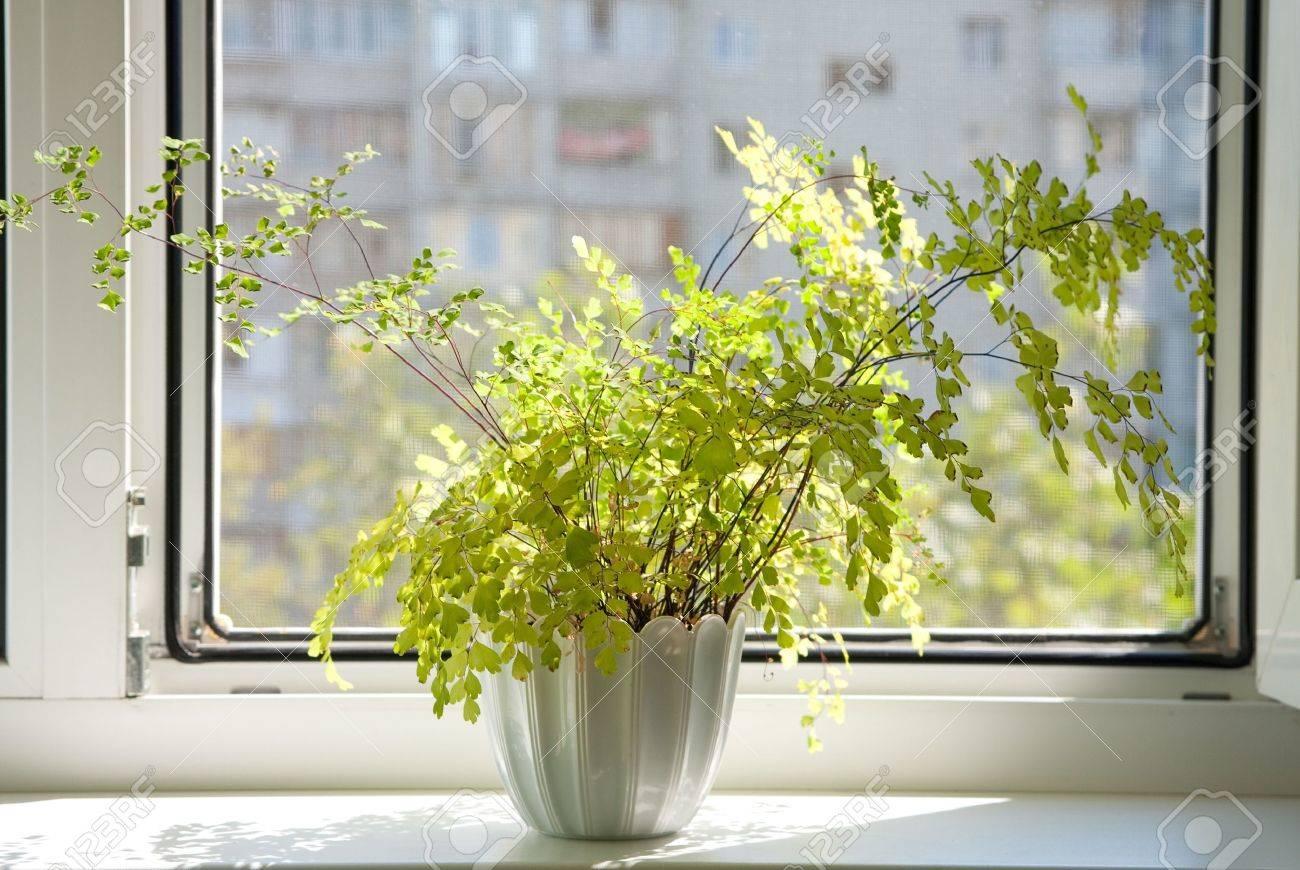 Window with flowerpot Stock Photo - 9062506