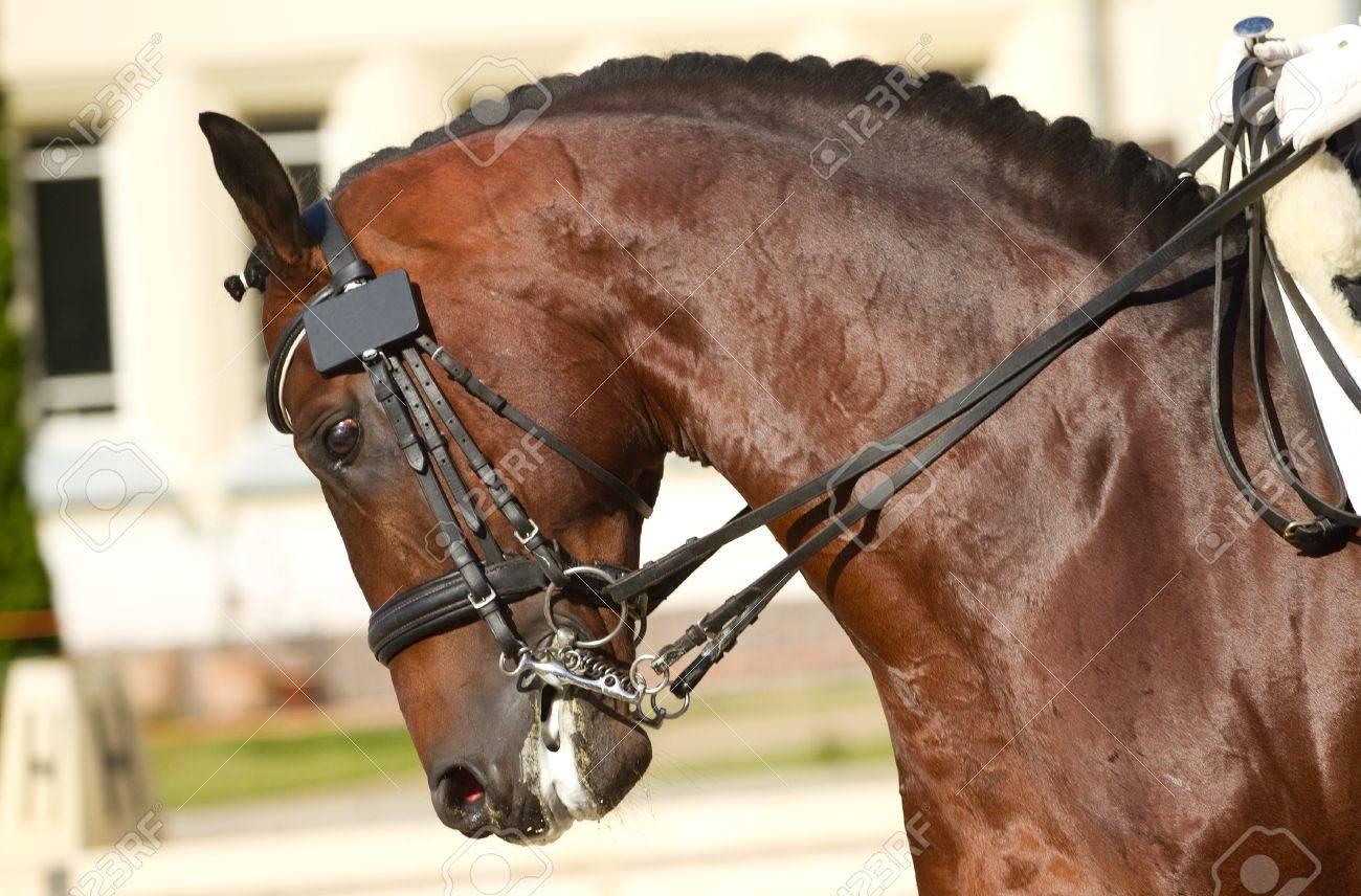 beautiful dressage horse - 10845108