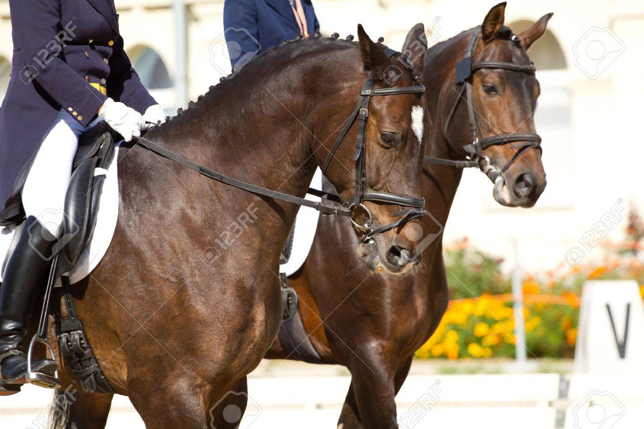 dressage horses and rider - 12700962