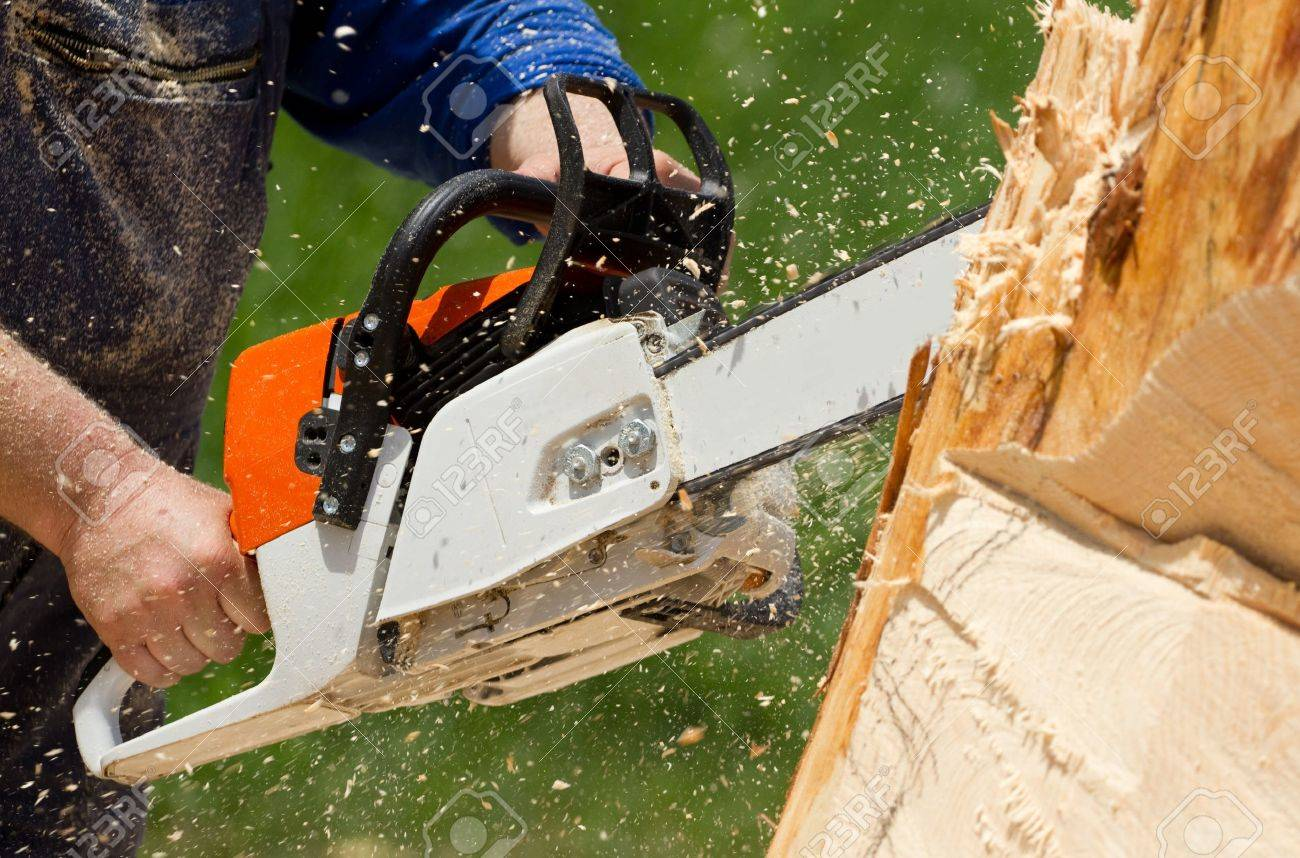 Man with chainsaw cutting the tree - 20237622