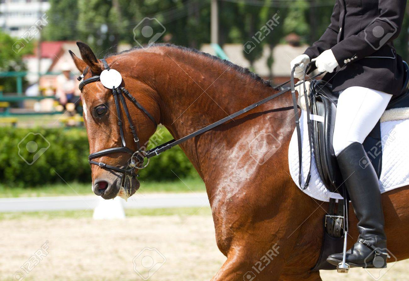 Dressage horse and rider - 20709382