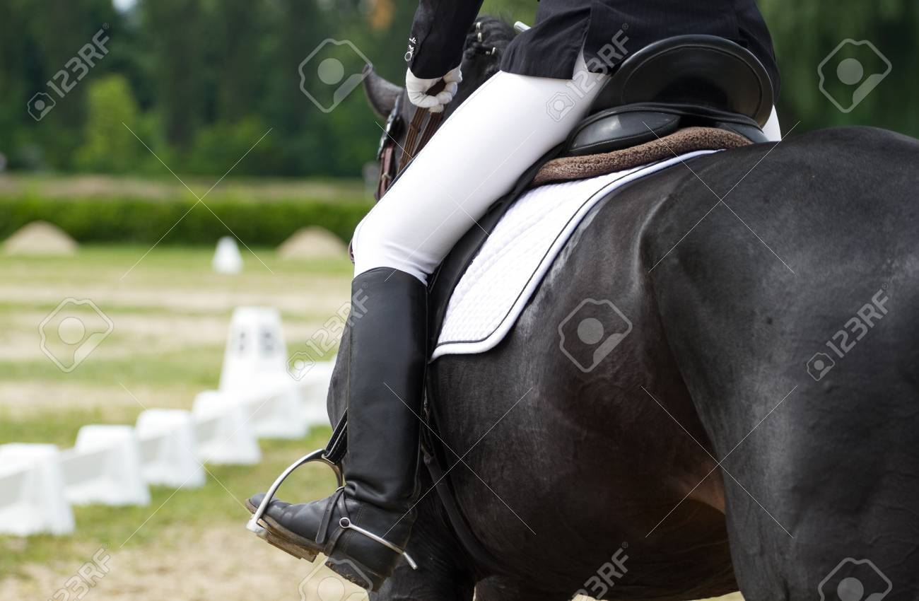 Dressage horse and rider - 22843797