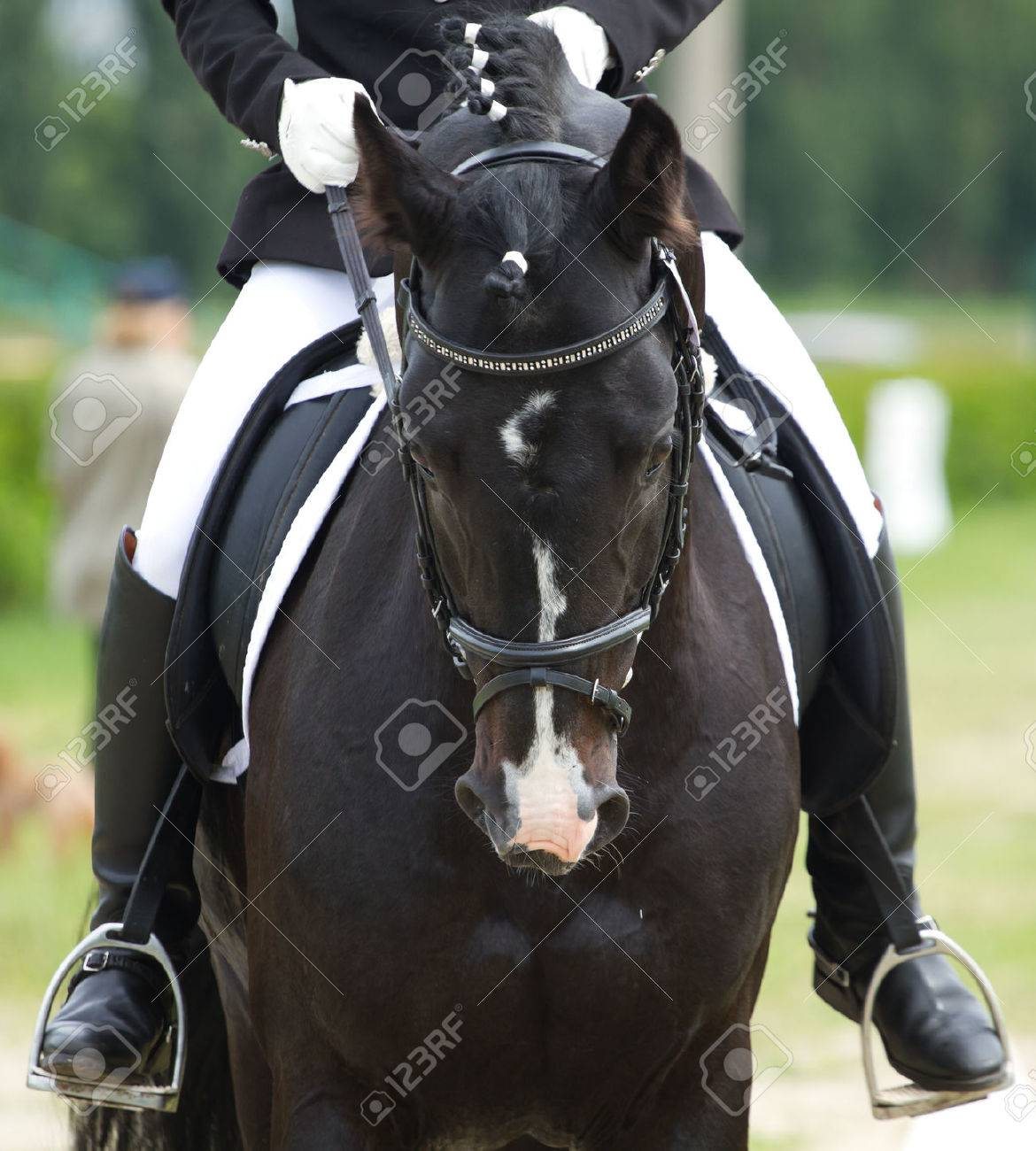 horse rider stock photos royalty free horse rider images
