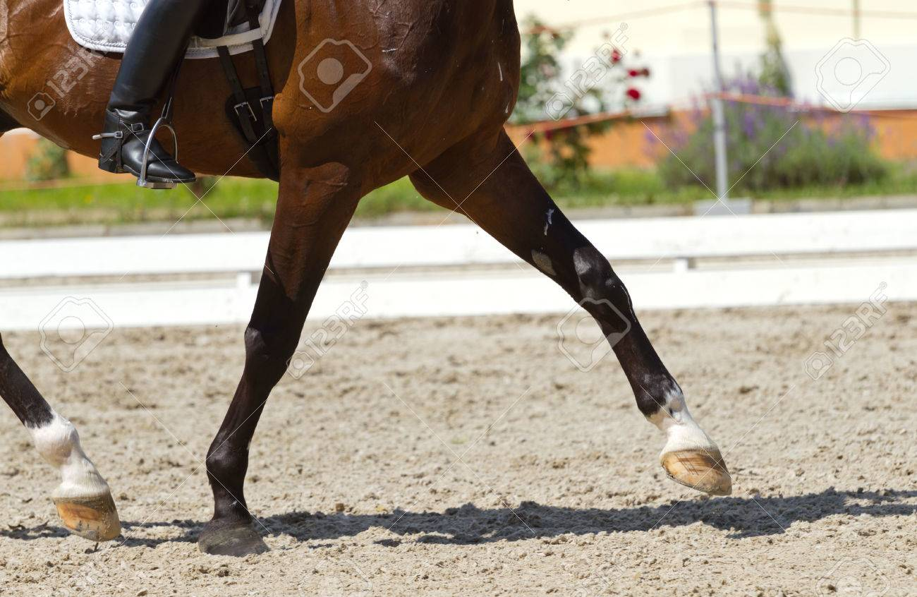 Dressage horse and a rider - 29838446