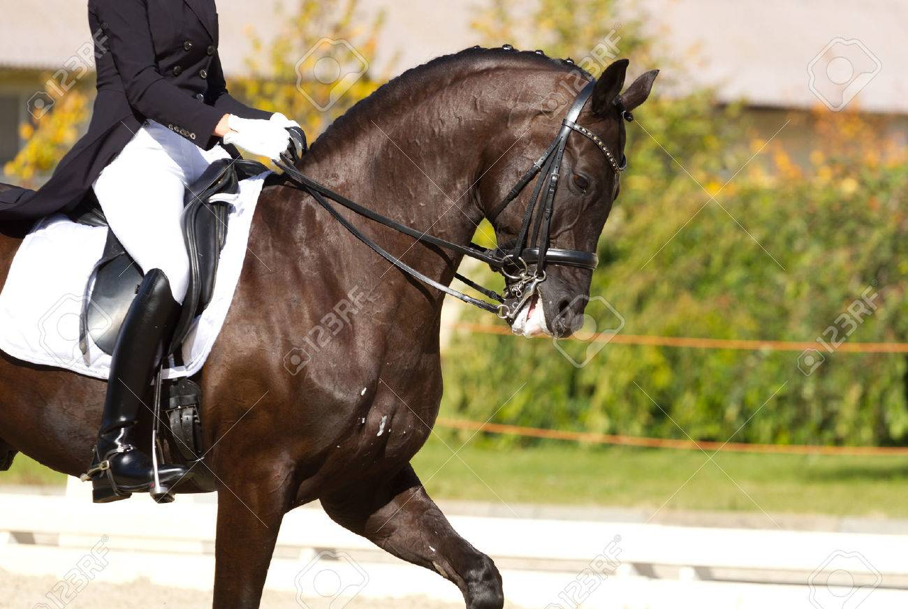 Dressage horse and a rider - 32442715