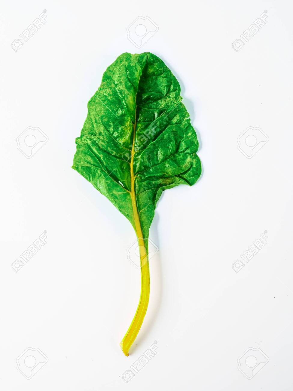 One Swiss Chard Leaf Isolated On White Background Fresh Swiss Stock Photo Picture And Royalty Free Image Image 133695634