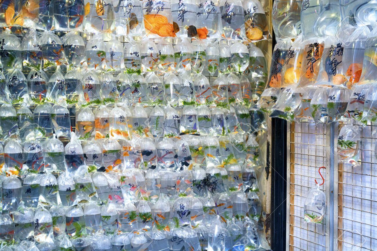 Fish aquarium market in delhi - Aquarium Fish Displayed In Plastic Bags For Sale In The Goldfish Market In Mong Kok Aquarium Fish Displayed In Plastic Bags For Sale In The Goldfish