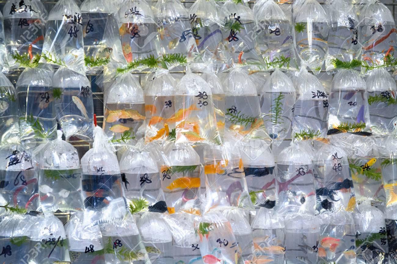 Fish aquarium market in delhi - Aquarium Fish Displayed In Plastic Bags For Sale In The Goldfish