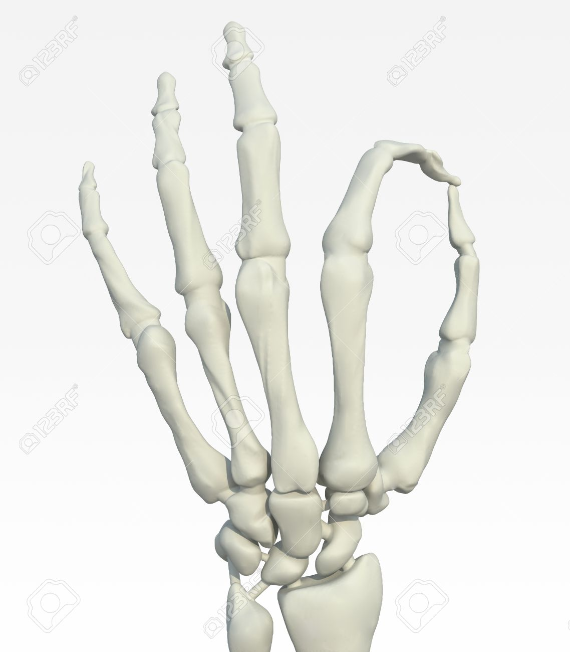 Wondrous Skeleton Hand Making Ok Gesture 3D Illustration Stock Photo Wiring Cloud Tziciuggs Outletorg