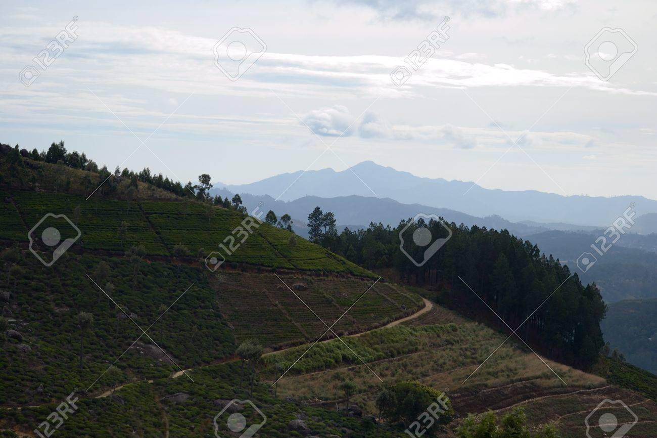 Sri Lankan hill country landscape Stock Photo - 17352360