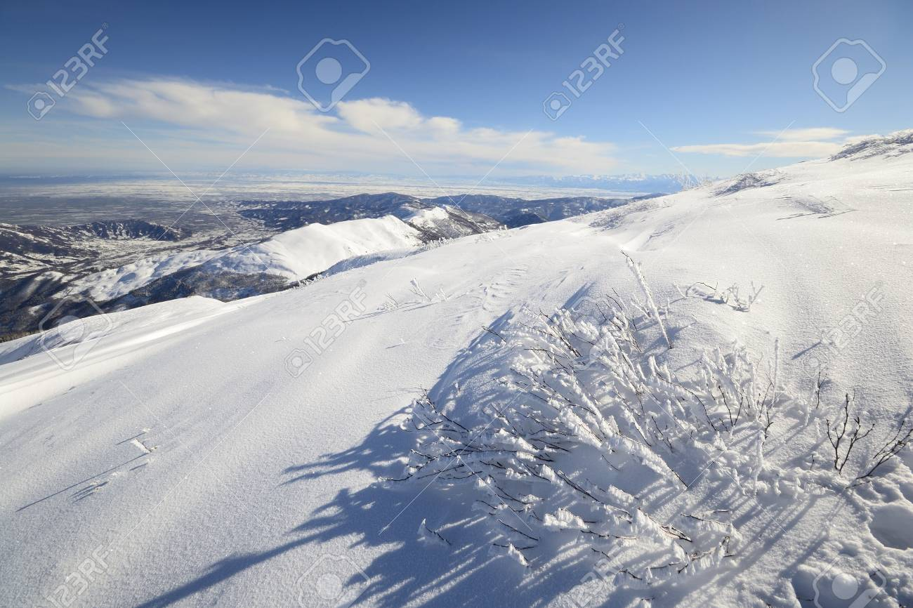 Wide angle view of the alpine arc in Piedmont, Italy, with frozen bush in the foreground Stock Photo - 17512359