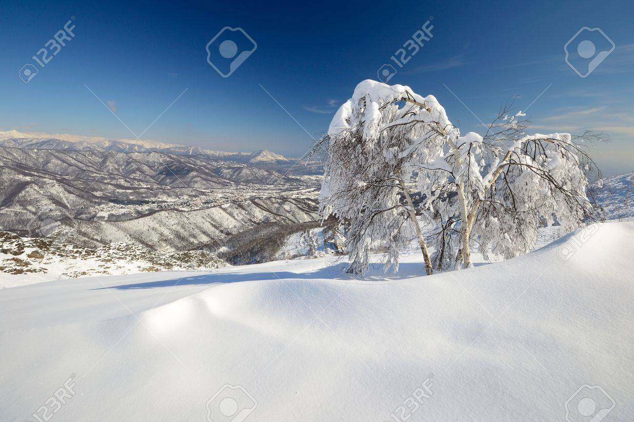 Elegant birch tree covered by thick snow with amazing winter mountainscape in the background and freshly fallen powder snow on the ground Stock Photo - 18102631