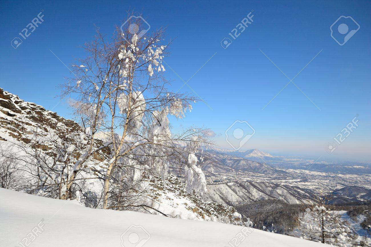Elegant birch tree covered by thick snow with amazing winter mountainscape in the background and freshly fallen powder snow on the ground Stock Photo - 18160877